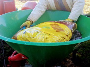 gnojenje maslina