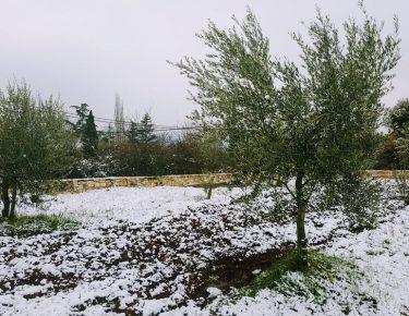 Olivenhain Vrta