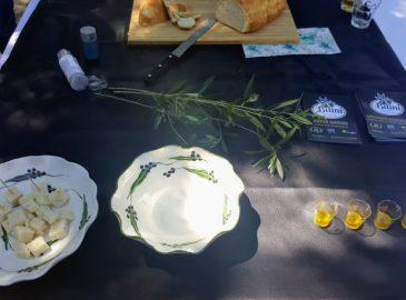 degustacija maslinovog ulja