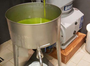ulje bilini u uljari