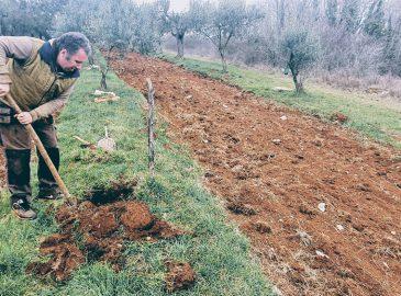 kopanje rupe za cokaricu