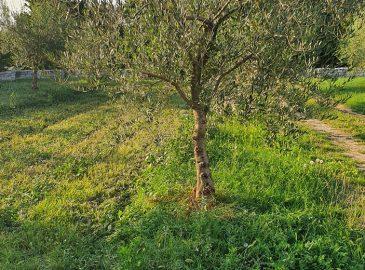 stablo očišćeno od vodopija